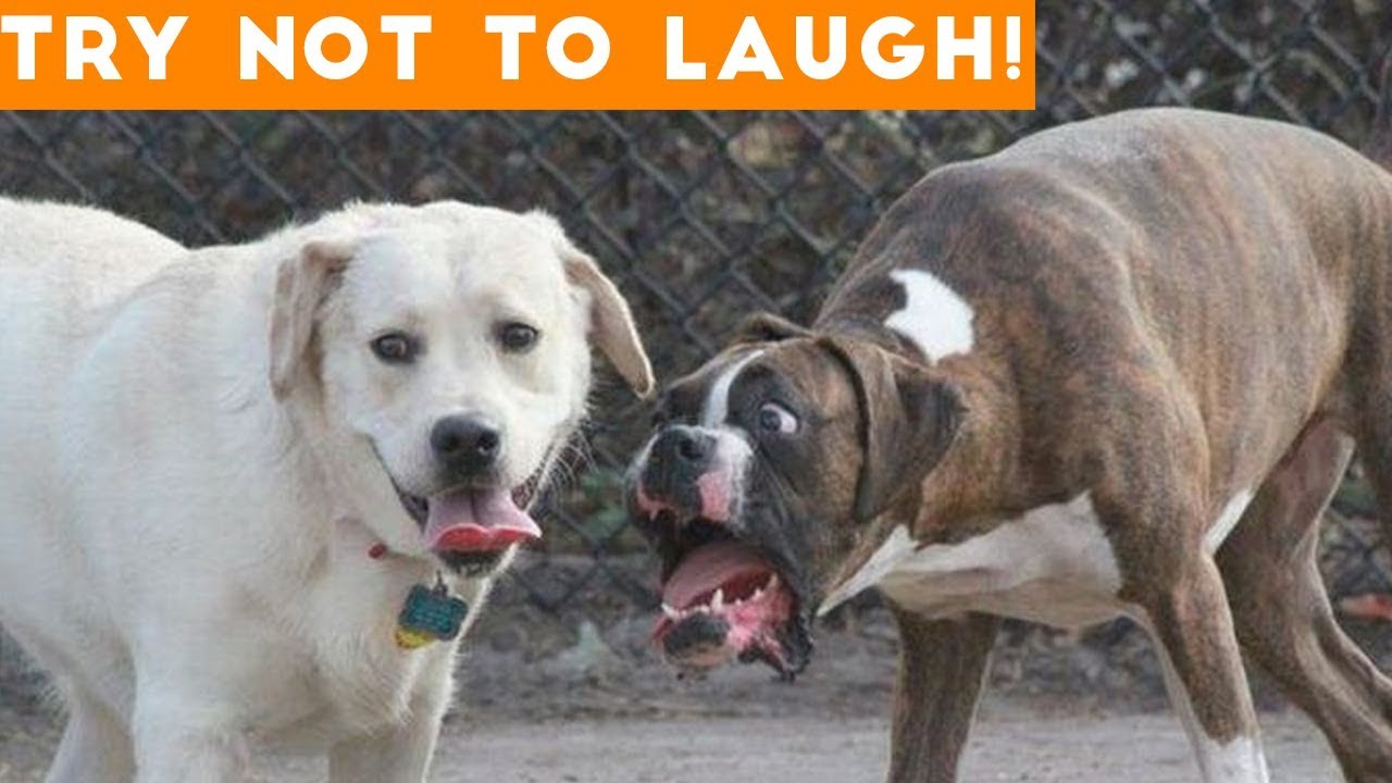 Image of: Kids Funny Pet Videos Animals Tv Online Try Not To Laugh At This Ultimate Funny Dog Video Compilation